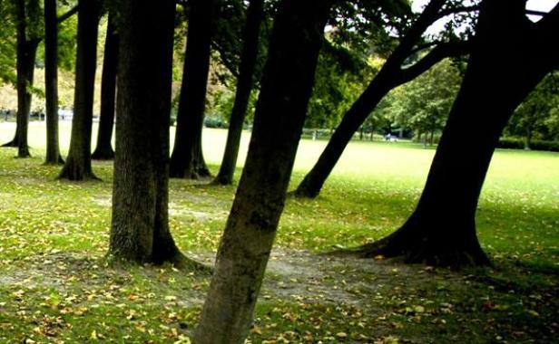 nouvelle charte des arbres